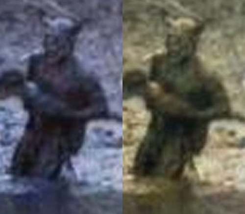 Legendary Monsters wallpaper called Photos of the Swamp Beast