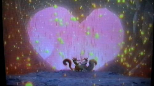 esquilo amor