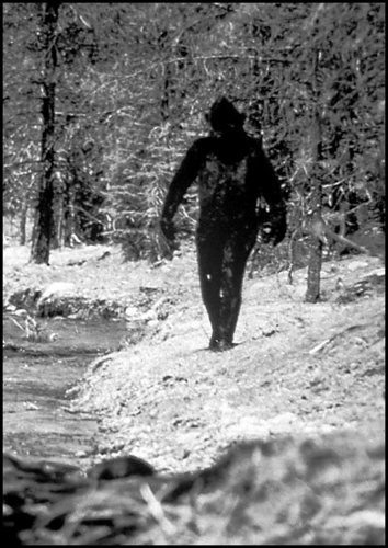 an argument in favor of the existence of bigfoot Argument # 1: it is irrational there is no evidence to support the existence of ufo's or the notion that we are being visited by alien abductions, bigfoot.