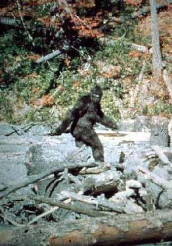Supposed 写真 of The Legendary Bigfoot