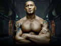 The Animal - batista wallpaper