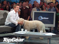 Top Gear - top-gear photo