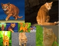 firestar collage