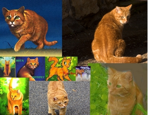 Warriors (Novel Series) Hintergrund titled firestar collage