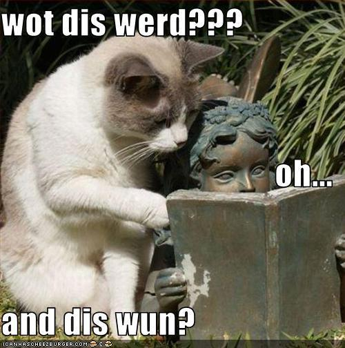 lol cats - lol-cats photo