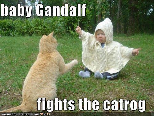 lol Cats