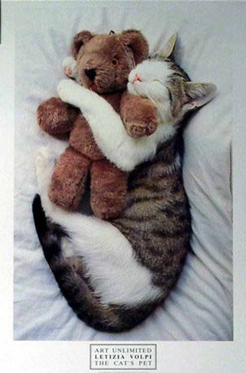sleeping chats :)
