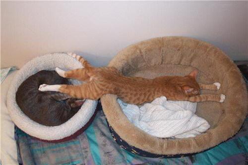 sleeping बिल्ली :)