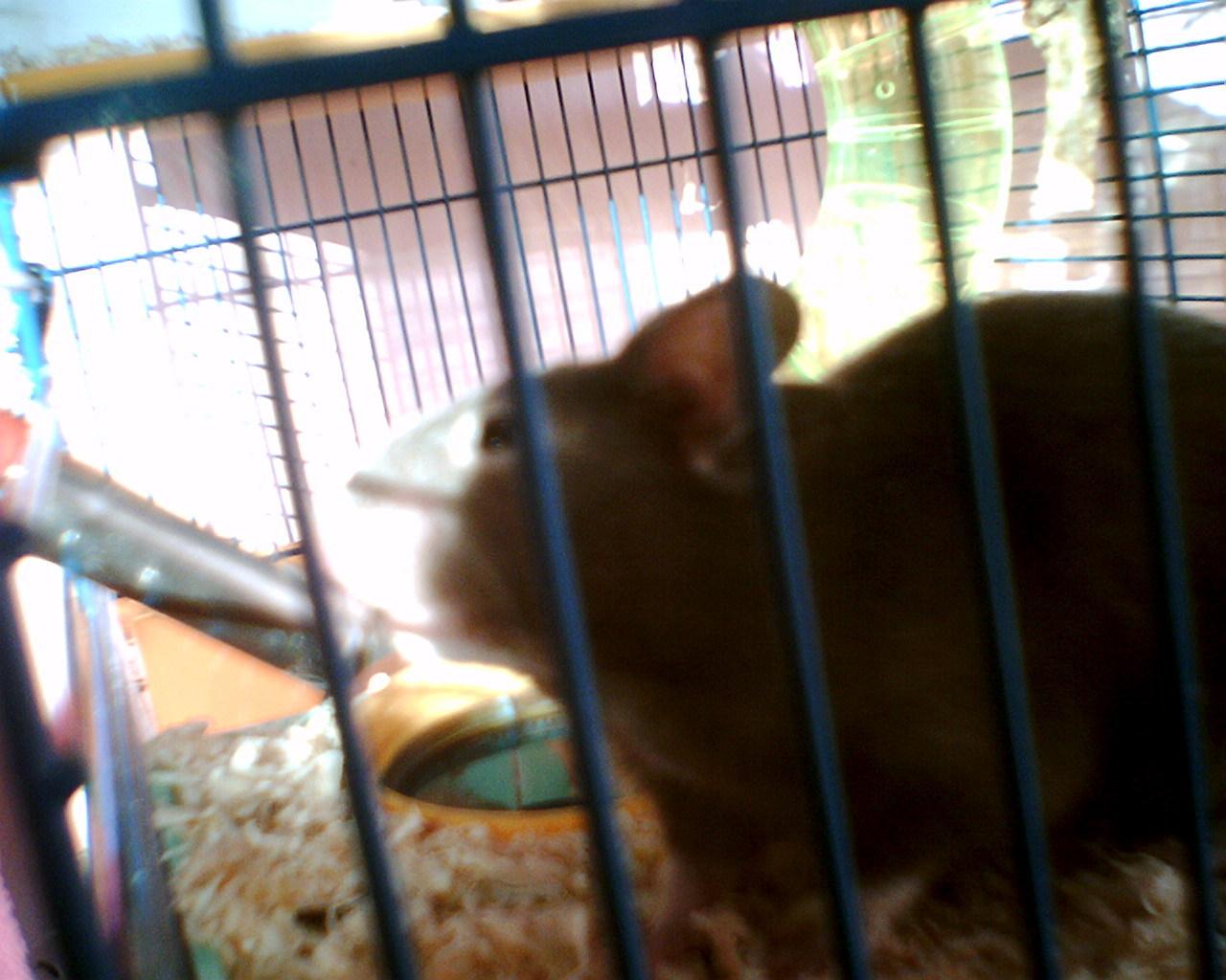 xxx hamsters
