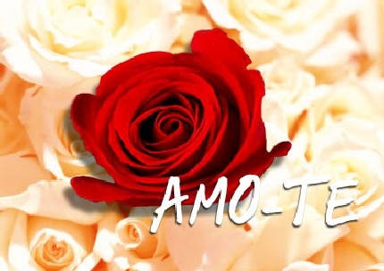 Love Wallpapers In Portuguese : Love You Mr Arrogant Forever Quotes So Much Images Baby to the moon and Back More Mom Wallpapers ...