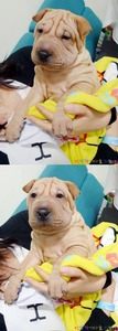 what is the name of g-dragon's dog?