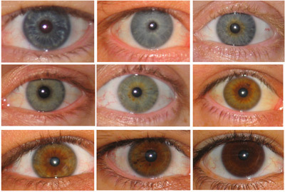 A new study por U.S. scientists finds that people with ______ eyes are likely to achieve más in life, intellectually, at least, than those with _______.