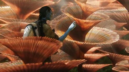 Name this Pandoran flora.