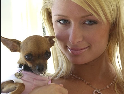 What is the name of Paris Hilton's Chihuahua?