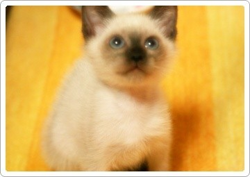 What's Sungmin cat name?