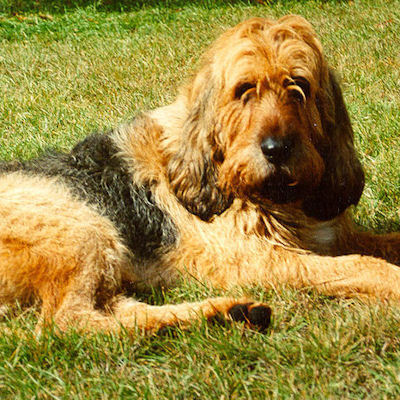 From which country does the Otterhound originate ?