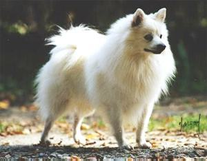 What Breed Of Dog is this?