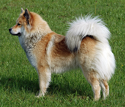 What Breed Is This ?