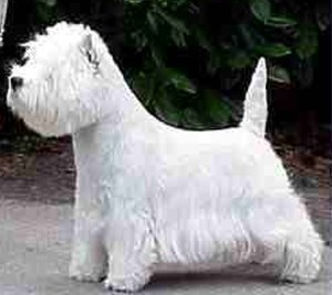 The Westie is a cute terrier. What is it's official breed name?