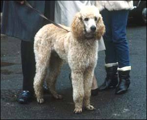 What is the name of this dog ?