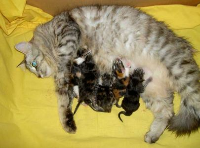 New born gattini are called a .........