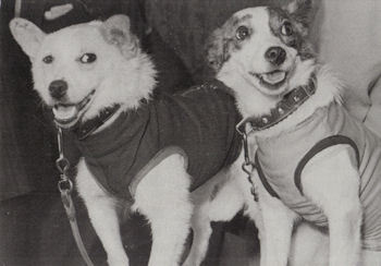 In 1960 Strelka and Belka were the first dogs to do what?