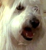 In what TV-show can we see this dog?