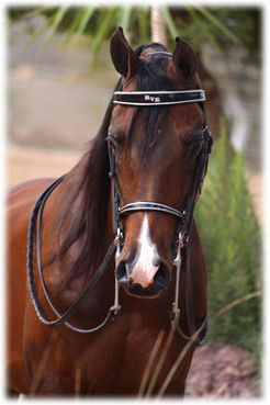 This horse was rescued by Priscilla Presley and now lives at Gracelands.What is his name  ?