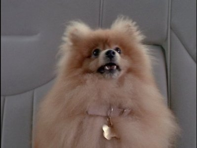 In which episode does Scully get Queequeg?