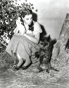 True または False? - Judy Garland hated Toto in real life