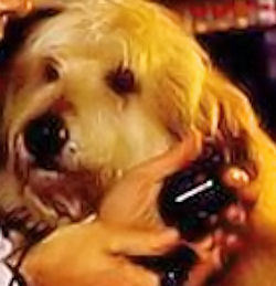 What is the name of the dog in the movie 'Back to the Future' ?