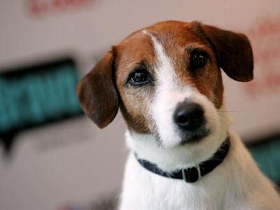 Frasier Dogs Name