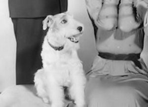 Name the dog from The Thin Man ?