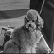 What Audrey Hepburn movie is this dog from ?