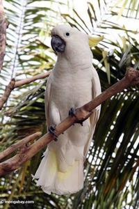 What is this Tropical rainforest bird called?