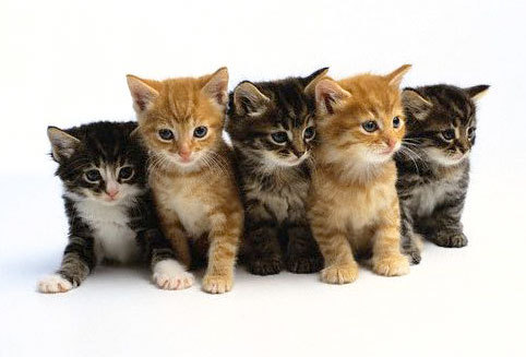 A litter of kittens usually consists of ?