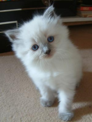 When do the kittens' eyes open?