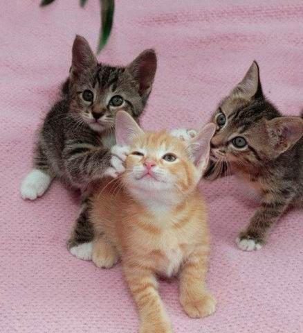 고양이 can purr ?
