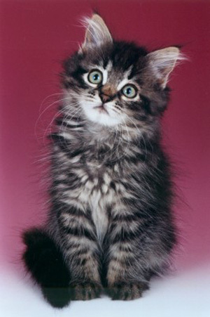 What is the earliest date that a kitten should be rehomed?