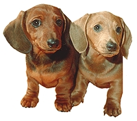 What food was named after the Dachshund?