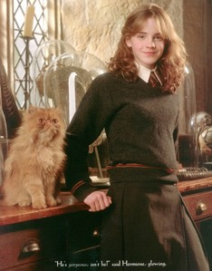 What is the name of Hermione Granger's cat?