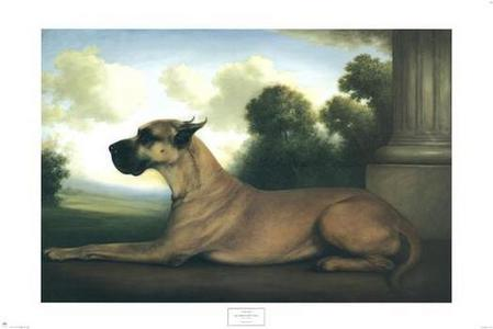 According to the AKC Standard, how should the Great Dane head look?