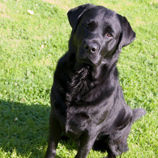 """In 1974's """"Jaws,""""A young man calls for his dog repeatedly, but the black Labrador Retriever is never to be seen again. What is this dog's name?"""