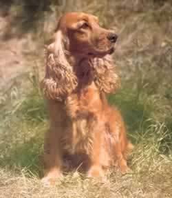 Virginia Woolf wrote a humorous 'biography' of Elizabeth Barrett-Browning's dog...