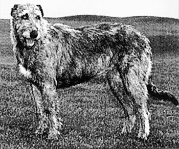 Who was in a famous tragic story, the owner of a particularly faithful dog called Gelert?