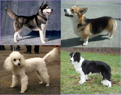 Which of these types of dogs sheds (moults) the least?