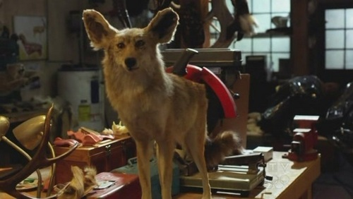 In 5x06 The eyes Have It while in the unsub's taxidermy 商店 Emily and the team conclude that:
