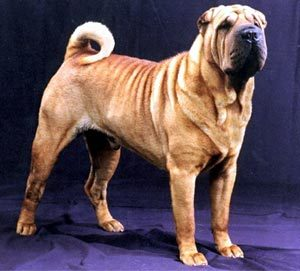 According to the Chinese myth, Pan-Hu (the Shar-Pei) got to marry Yun-Ch'i (the emperor's daughter) because he killed Wu.