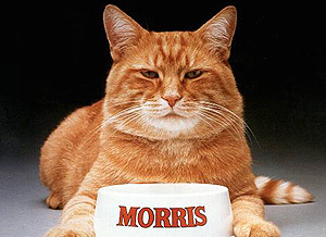How many chats have claimed the role of Morris, the spokescat for Nine Lives pet food?