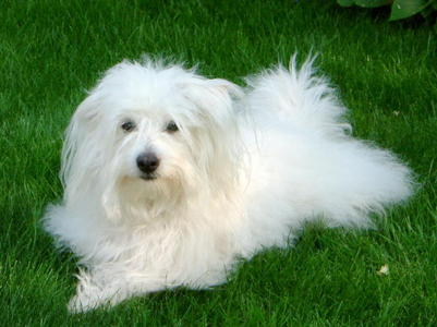 The Coton de Tulear was first formally recognised as a breed by the Societe Centrale Canine (the French national kennel club)when ?